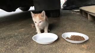 외출한 새끼고양이 밥주기 Feeding abandoned kitten