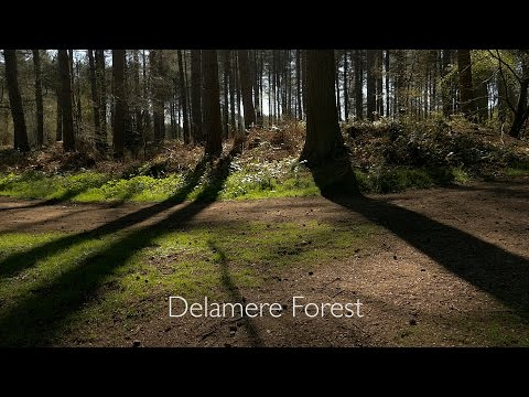 Delamere Forest Park - Documentary