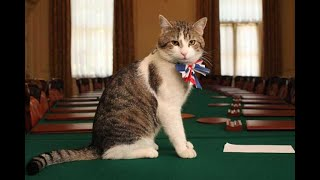Chief Mouser - The Downing Street Cats