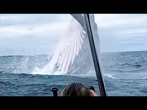 Giant Whale Jumps Out Of Nowhere - Incredibly Close Whale Encounters!