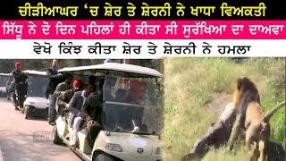 ਸ਼ੇਰ ਤੇ ਸ਼ੇਰਨੀ ਨੇ ਖਾਧਾ ਵਿਅਕਤੀ | Chhatbeerh Zoo | Lion incident | Man with Lion