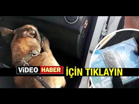 OSCAR MİLAS'TA UYUŞTURUCUYA GEÇİT VERMEDİ...