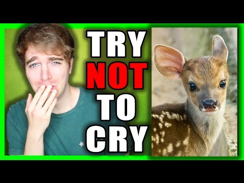 TRY NOT TO CRY CHALLENGE 3!