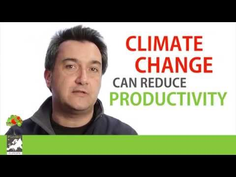 Miguel A. Zavala - Tree Diversity Supporting Forest Adaptation under Climate Change