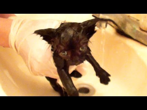 Tiny Kitten's First Bath