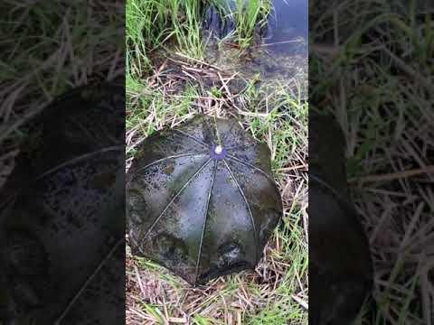 Ловля раков, Тамбов, поставили раколовки на 7 дней на неизвестном пруду, Crayfish Catching, раки.