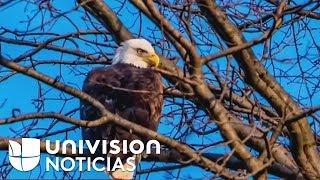 Habitantes de Nueva York celebran el avistamiento de un águila calva, símbolo nacional de EEUU
