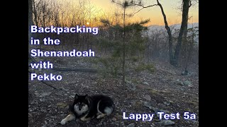 Backpacking in the Shenandoah with our dog Pekko  Finnish Lapphund  Lappy Test 5a