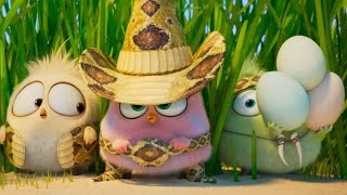 The Angry Birds Movie 2 (2019) - Wittle Sisters full Scene | Movie clips | |Best Scens|