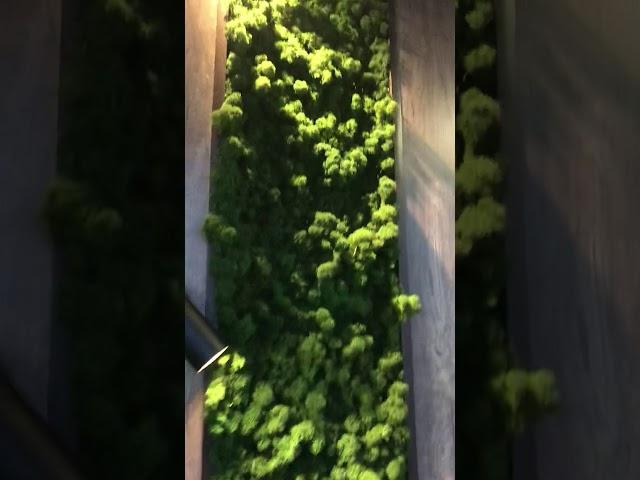 Смотреть видео Балкон под ключ(стабил. мох)