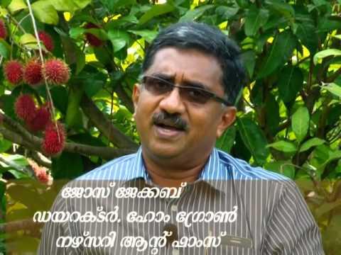 Noorumeni 373 Exotic fruits Home grown farm