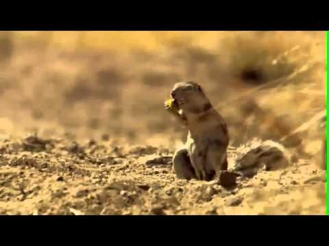 Epic Moment - Africa squirrel drops nut in shock (HQ ...