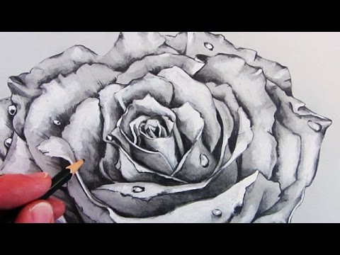 How to draw a realistic rose time lapse
