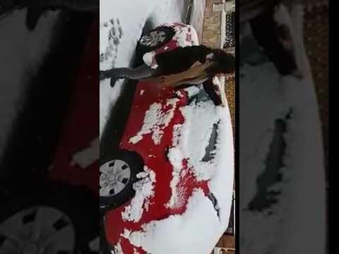 ninge la murcia