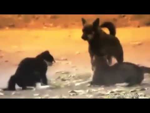 DOGS BREAKING UP CATS FIGHTS