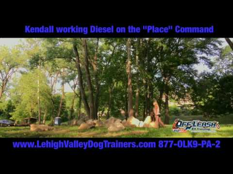 Pit Bull Diesel Learning the Place Command ||| Lehigh Valley Dog Trainers: Off Leash K9 Training