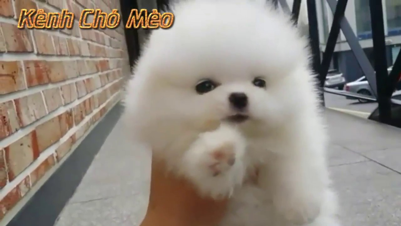 Chó mèo dễ thương nhất thế giới - chó con dễ thương đáng yêu nhất quả đất