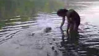 Westie's First Swim At Cumberland Falls
