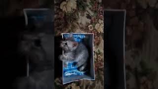Нашли котенка