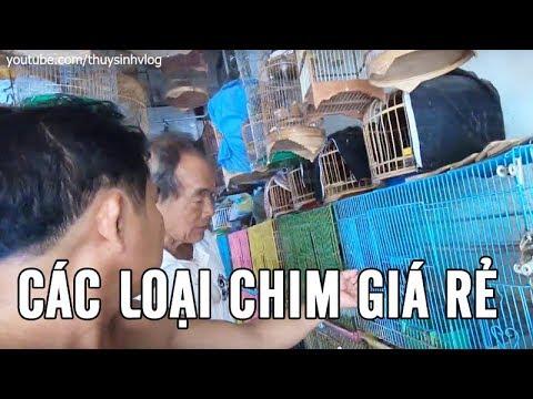 Bán Chim Chào Mào, Chim Đại Bàng, Chim Săn Mồi, Chim Yến Phụng Giá Rẻ Ở Sài Gòn