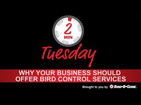 Why your Business Should Offer Bird Control Services