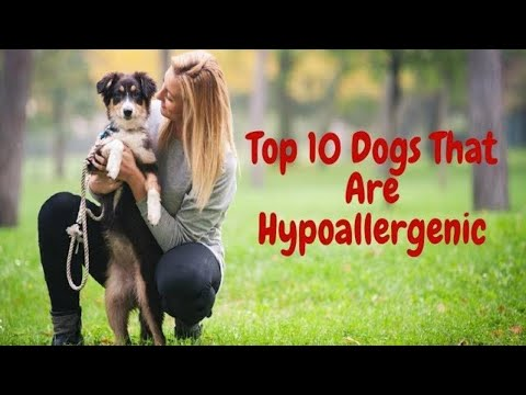 Top 10 Dogs That Are Hypoallergenic (2018)