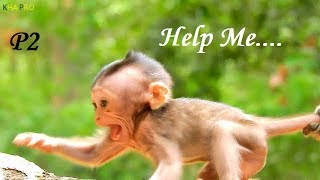 Million Pity ! Pitiful Baby Monkey Tries To Call Mom For Help But No Hope | Baby Cries Very Scare