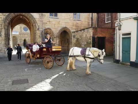 Horse and carriage tour in Lincoln