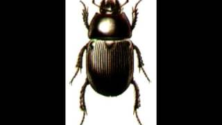 Watch Melanie Alexander Beetle video