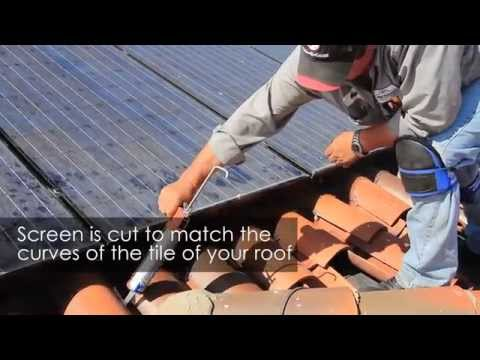 Bird Dropping Clean Up Around Solar Panels | Pro Pacific Pest Control