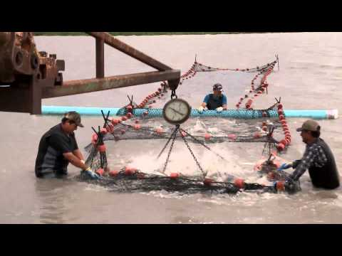 Govt sanctioned tour of catfish farm from YouTube · Duration:  2 minutes 34 seconds  · 92 views · uploaded on 4/17/2017 · uploaded by AP Archive