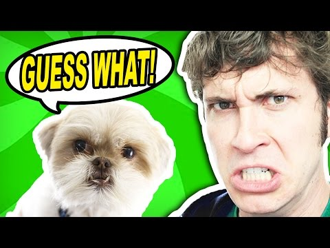 GUESS WHAT?!?  - The Talking Dog Show (feat. Tobuscus)