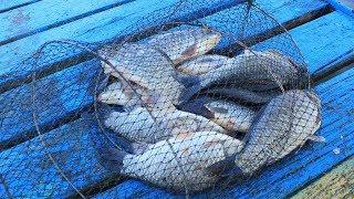 Килограммовые караси поперли! Рыбалка в Краснодарском крае!