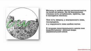 Методы Распознавания Плодности (МРП)Урок 2 Часть2
