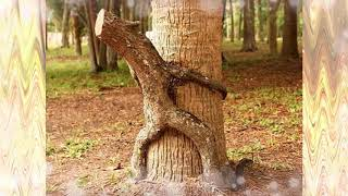 15 Strangely Shaped Trees - Let