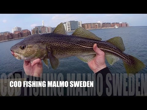 Cod fishing Malmo Sweden - Torskfiske Öresund