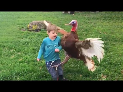 Funny Videos Animals - Funniest Turkey Compilation - | LIFE FUNNY PETS 🐯🐶