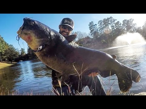 GIANT CATFISH Caught Out Of A TINY POND!!!