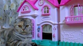 КОТЕНОК 🐈 🏰 ИГРАЕТ Смешные Коты и Котята NEW Приколы с Котами