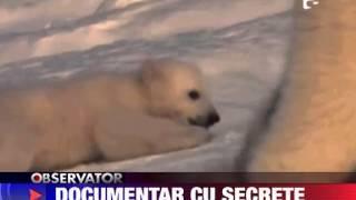 Documentar despre ursi polari 12 DECEMBRIE 2011