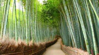 Новая Эра. Бамбук здоровья!