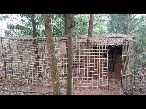 Primitive technology:The Big Bird Enclosures!-Primitive life-wilderness
