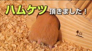 【商品レビュー】夏でも涼しく過ごせる!ひんやり涼感ハウスを購入してみた! thumbnail