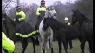 Wild Horses of Newbury, Best Quality
