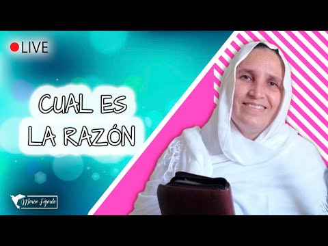 Cual Es La Razón | María Fajardo | Jueves 03-06-2021