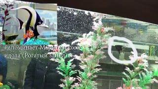 Поехали покупать рыб lll Вуалехвост, Телескоп, Склярия(Купил аквариум 50 литров за 1600 рублей (отличная цена)., 2016-03-07T05:50:02.000Z)