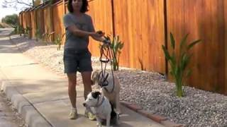 San Diego Dog Training Leash Walking 2 Dogs