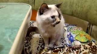 Кошка поела колбаски
