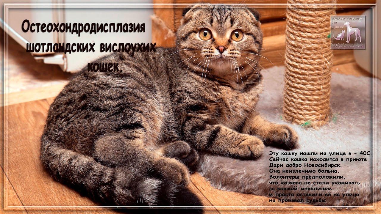 Согласитесь, что очень сложно пройти мимо голодного котенка, особенно в холодное время года. Многие семьи обзавелись домашним питомцем,