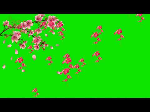 Effects  Flowers Chroma Key Effects  Green Screen Effects thumbnail